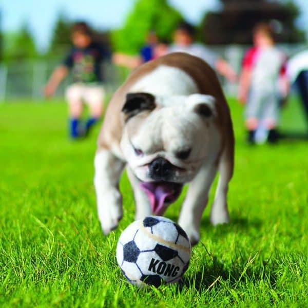 Kong Sport Ball with dog